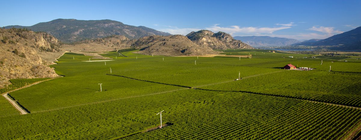Aerial Okanagan Vineyard