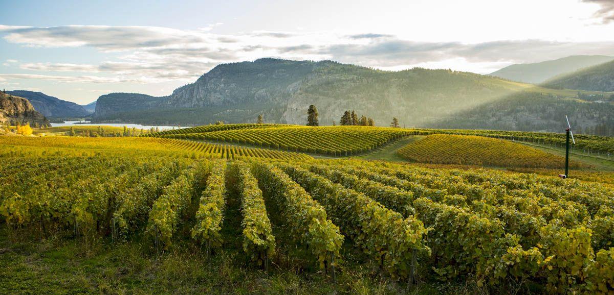 British Columbia Wine Country