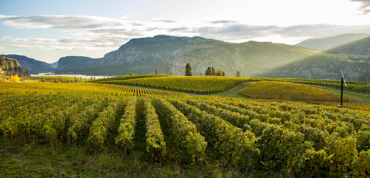 British Columbia Wine Country