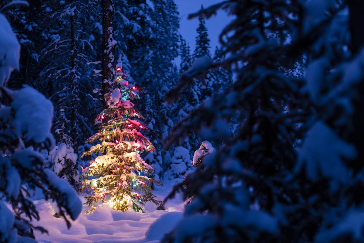 Shawn Talbot Christmas Tree