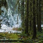 Shawn Talbot Travel Tourism Washington Hoh Rainforest