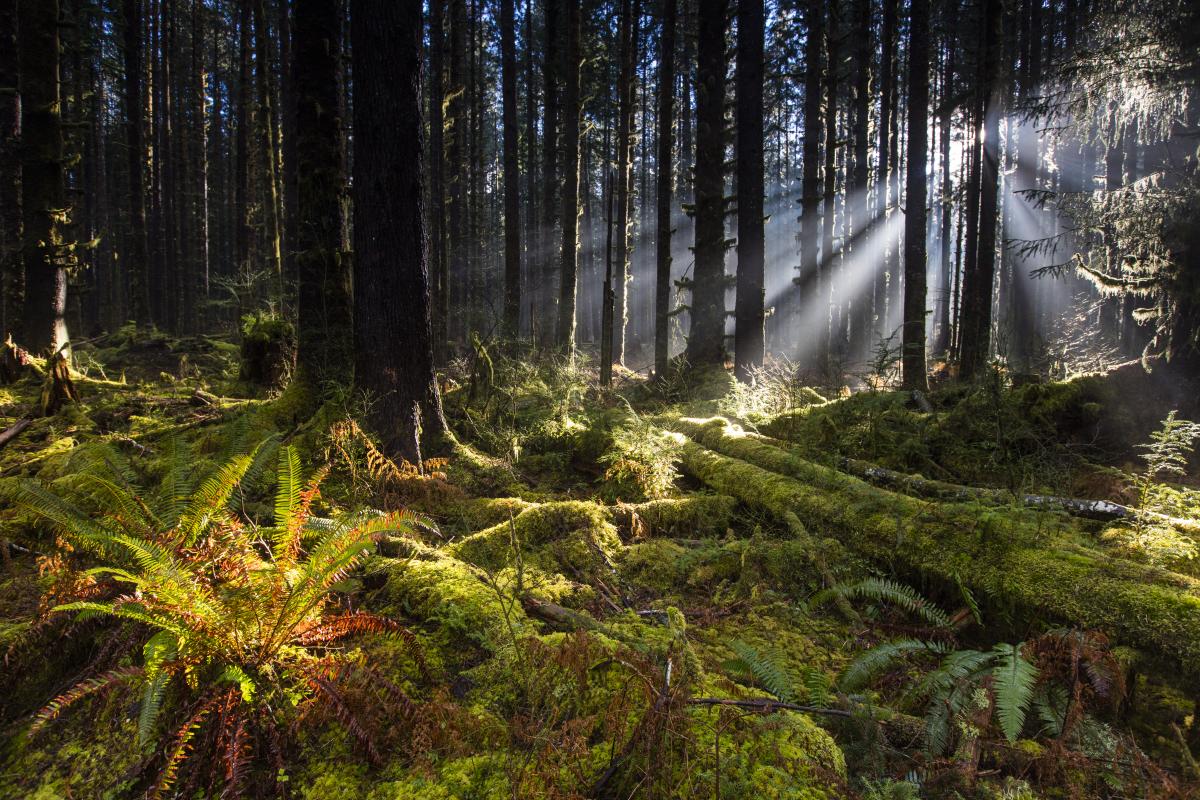 Shawn Talbot Travel Tourism Washington Rainforest