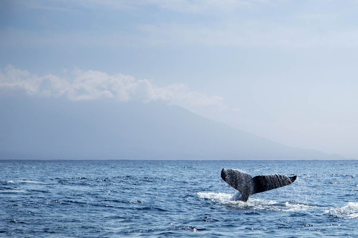 Shawn Talbot Kelowna Commercial Photographer Hawaii Humpback Whale
