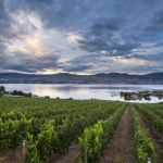 Shawn Talbot Kelowna Commercial Photographer Quails Gate Vineyard